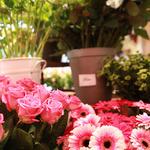 Les Jardins de Lise - Photos